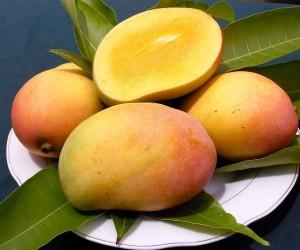 Mango-18 new1