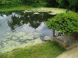 2011-07-10-1310292526-d41d8cd98f00b204e9800998ecf8427e103.Village_Pond