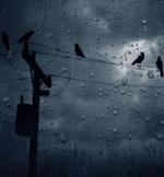 rain 1 1920 x 1200 (09)2