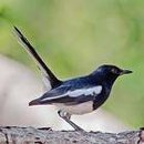 Bird_34