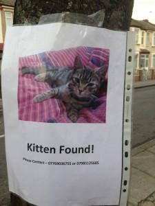 Kitten found notice