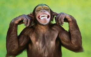 funny-monkey-1