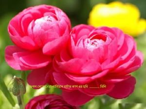 red-ranunculus-flowers---wallpaper-102760